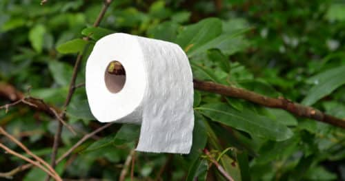 Toilet Paper Hanging From A Branch In The Woods For Shelter And Hygiene